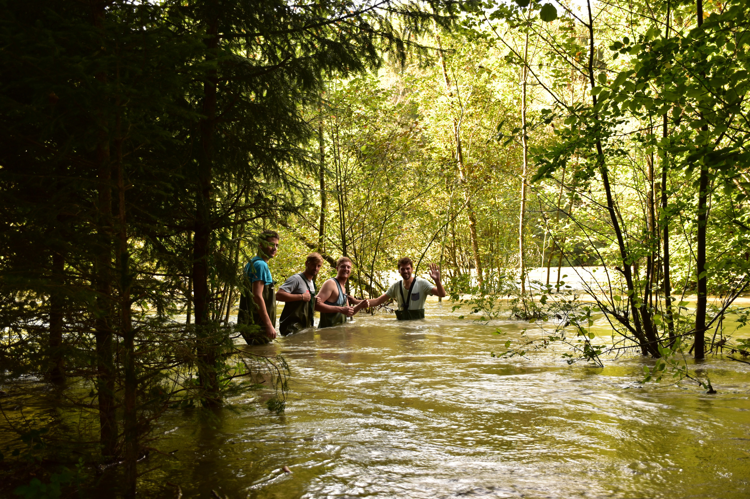 During the flood the Saane floodplain forests are under water.